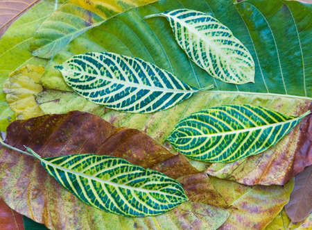 Beautiful leaves of various exotic plants. Nature of Thailand.