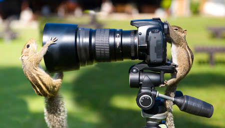 Palm squirrels staged a photo shoot. Animals and humor. 写真素材