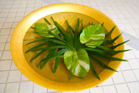 Beautiful leaves of exotic plants lie in a basin of water. Thailand. 写真素材