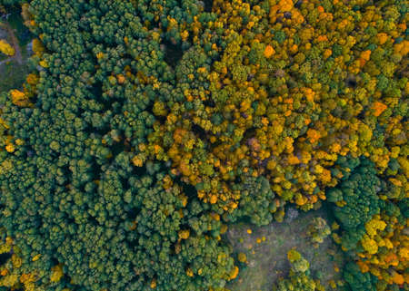 Autumn nature of central Russia from a height. Aerial photography.