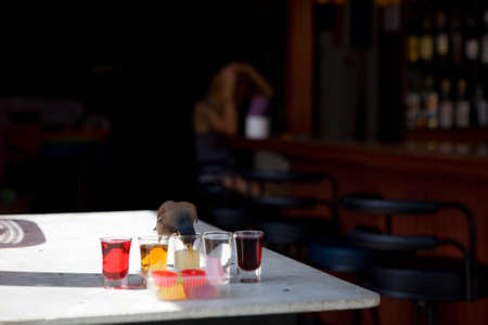 Starling drinks from a glass on a table in a bar. In the background, out of focus, a young woman preens.