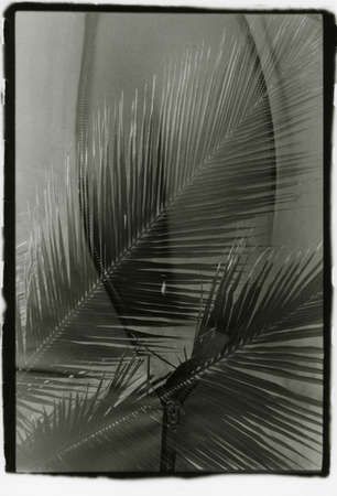 Female buttocks and palm tree in one frame. Multiple exposure. Attention! Image contains grit and other artifacts of analog photography.