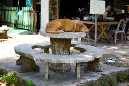 A large red dog in a collar sleeps on a stone table. Outdoors. Reklamní fotografie