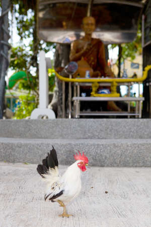 Beautiful rooster on the background of the sculpture of a monk in the temple Wat Suwan Khiri Ket. The culture of Thailand.
