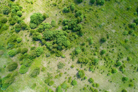 Top view on the bushes and trees in summer. Aerial photography of the landscape. 免版税图像