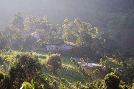 Top view of a small rural settlement and tea plantations. Sri Lanka. 免版税图像 - 148136996