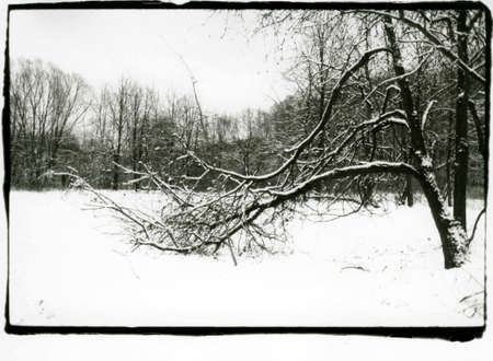 Winter landscape with a curved tree covered with snow. Attention! Image contains grit and other artifacts of analog photography!