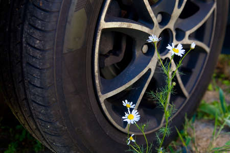 Chamomile flowers on the background of a car wheel. Nature and technology. Reklamní fotografie
