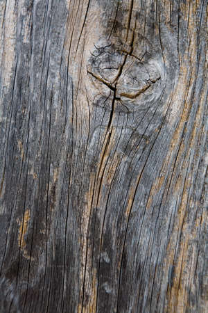 The beautiful texture of a dried old tree.