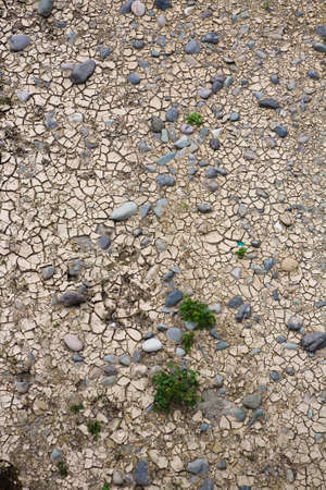 Plants and stones on drought cracked ground. Nature. Reklamní fotografie