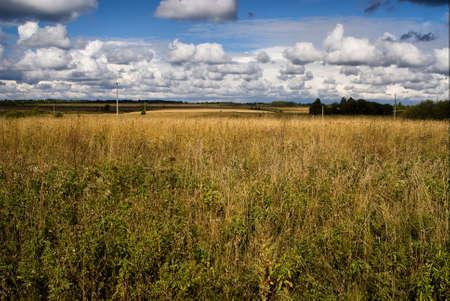 humilde: Avena campo de la agricultura con el cultivo
