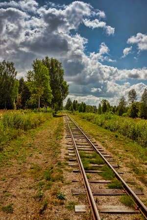 cross ties: The railroad in the wood in an environment of trees in the summer