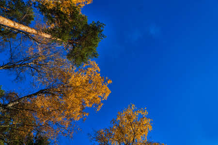 Autumn crowns in the sunny day against the clear sky Stok Fotoğraf