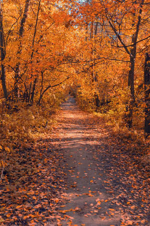 Shady lime avenue in the sunny autumn afternoon Stok Fotoğraf
