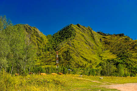 Mountain farm in summer Stok Fotoğraf