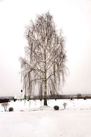 lonely birch in the winter on a cemetery Stok Fotoğraf