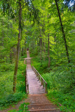 The bridge through a ravine on a forest track in the summer Stok Fotoğraf - 65417566