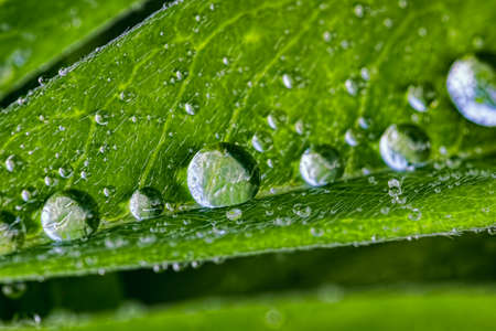 Large drops of a rain on a green leaf with tektury a drop, a rain to drop, water, a le