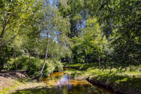 Forest landscape with the river in the sunny summer day Stok Fotoğraf