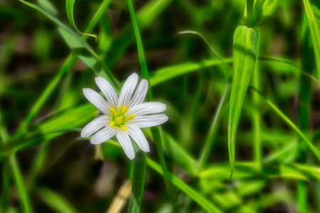 white spring forest flower in the solneny afternoon on a green background Stok Fotoğraf