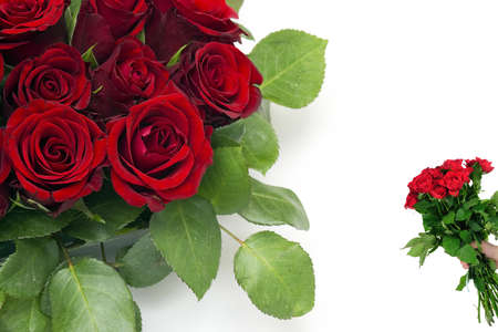 debutante: red roses