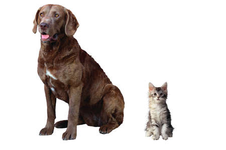 puppy and kitten: Puppy, kitten