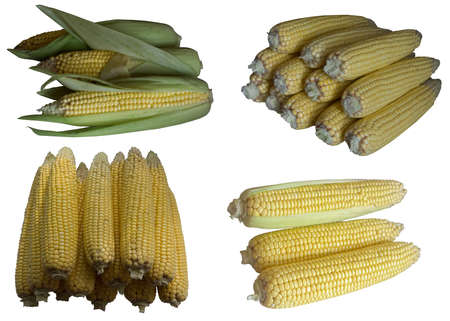 whiteness:  Grain, Vegetable, Whiteness, Unique Object, Background, Agriculture, Food, Mature, Vertical