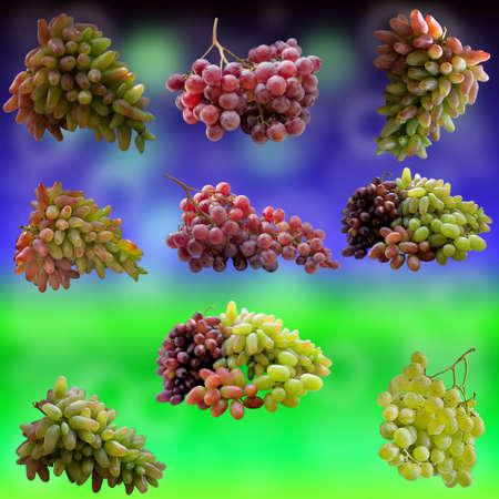 Bouquet, Winery, Wine, Vine, Delicious, Green Flowers, Summer, Sheet, Autumn, fruit. photo