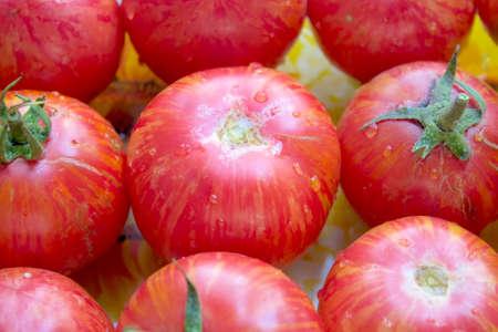 Bright, background, harvest, tomato, ripe, fresh, gardening, product, natural, tomato. photo
