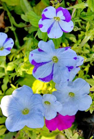odor: Flower, bouquet, bunch, garden, background, fresh, odor, blooming, white, aroma. Stock Photo