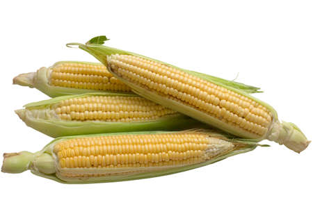 sweetcorn: Corn, maize, sweetcorn, cob, kernels, isolated, grain, leaf, husk, vegetable.