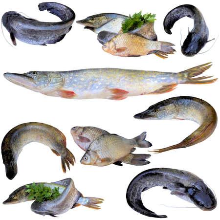 river fish: Fresh river fish. Stock Photo