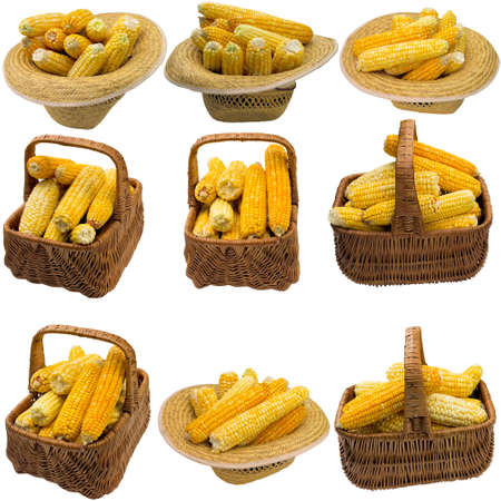 Basket with corn on a white background.