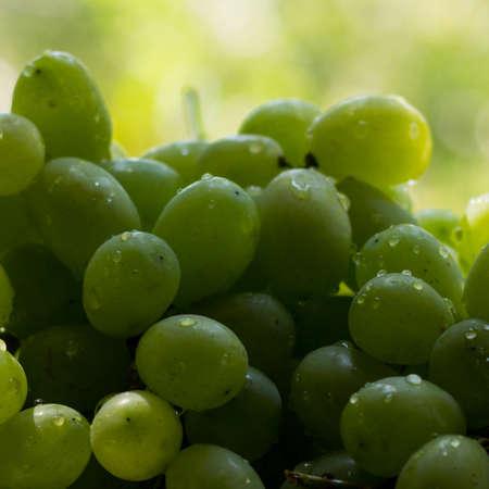 Green grape background.