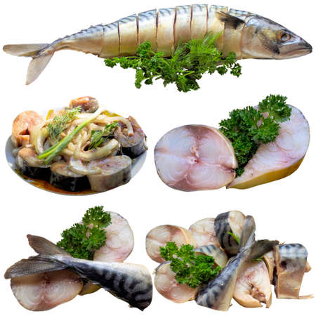 Atlantic mackerel is isolated on a white background. Stock Photo