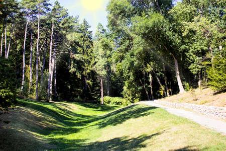 Forest, ukraine, uman, beautiful, garden, green, landscape, nature, outdoor, park, sofiyivka.