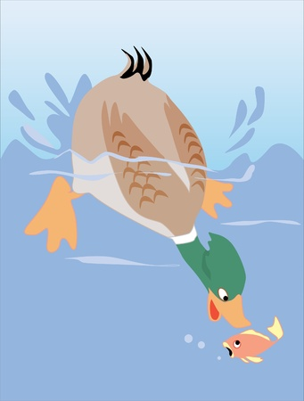 red fish: This is illustration duck catching small fish