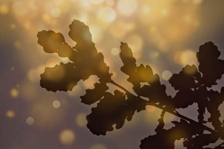 Abstract background with oak leaves in the sun Фото со стока