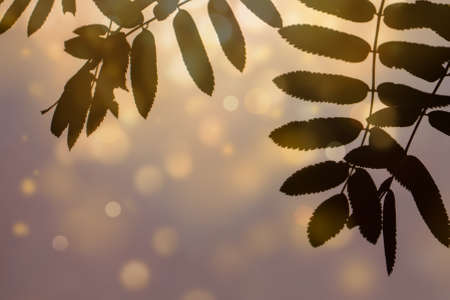 Abstract background with rowan leaves