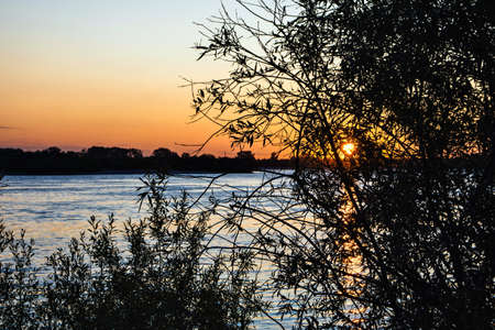 Leaves of trees at sunset over the river Stockfoto