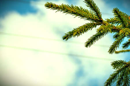 spruce branch on background of blue sky and clouds Stockfoto - 128618125