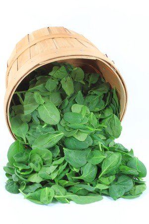 Still life picture of spilled from wooden bushel basket Organic Baby Spinach over white background.