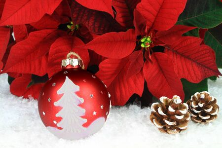 Typical for Christmas and Holidays Season Symbols. Flower Poinsettia, Decorative Red Ball with painted tree and flakes, Pine Cones over white snow.
