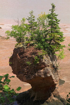 Hopewell Rocks are natural Formations with different sizes dark sedimentary formed by tidal erosion from shoreline of Bay of Fundy in New Brunswick, top part is covered by bushes and small trees