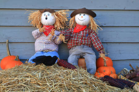 Humorous Thanksgiving picture - two scarecrow dolls guarding pumpkins and corn, surprised from crow eating (picking) seeds from maize (corn on knob) (one of them has very surprise expression on face)