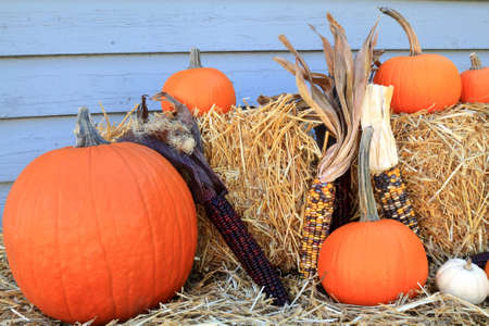 Picture of typical for Fall Holiday, Thanksgiving and Harvest, pumpkins and corn (maize), Bails of Hay arranged as decoration Stock Photo