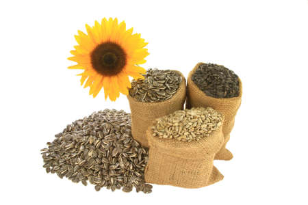 Different kind (sorts) sunflower seeds Black Oil known as well as bird seeds, Striped and Hulled known as well unshelled in burlap bags (sacks) and spilled in front of sunflower bloom over white
