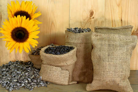 Different kind (sorts) sunflower seeds Black Oil known as well as bird seeds and Striped seeds in burlap bags (sacks) and spilled and sunflower bloom over wooden table in front of wooden wall