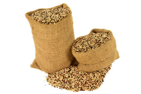 Popular as Tri color (Tri-Color, Tricolor) Organic Quinoa seeds (white, Black, Red Quinoa seeds) in burlap bags and spilled out on pile isolated over white background Stock Photo