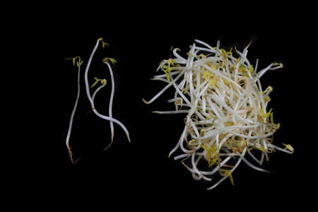 Fresh bean sprouts on pile and separated singles over black background. Bean Sprouts living food easy to digest filled with essential vitamins, minerals, fibre, enzymes and Nutritional Value